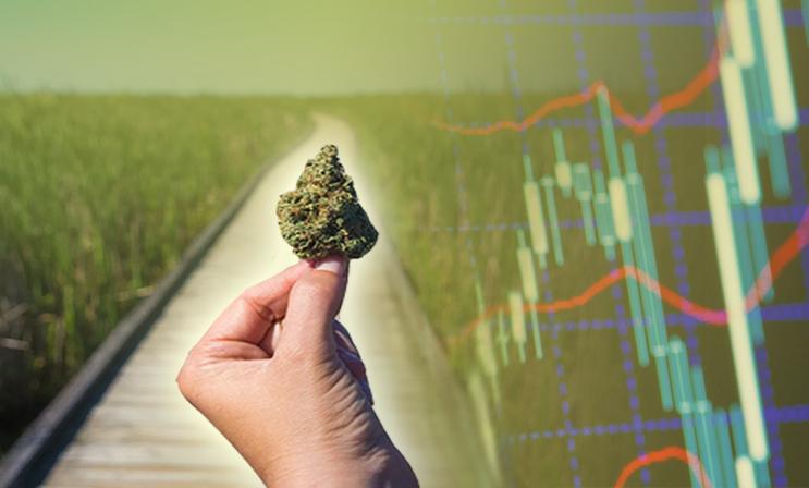 marijuana stocks to watch summer